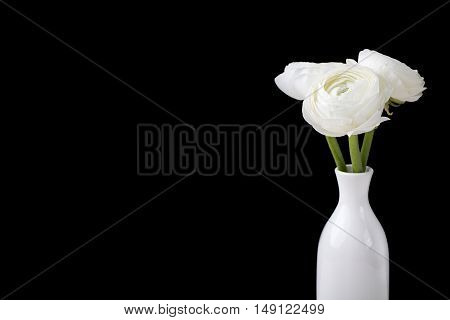 White ranunculus flowers in ceramic vase Black background Copy space