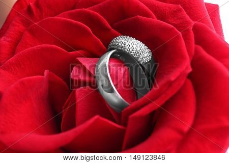 Two wedding rings in red rose