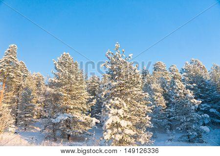 Sunny Winter Wintry Landscape