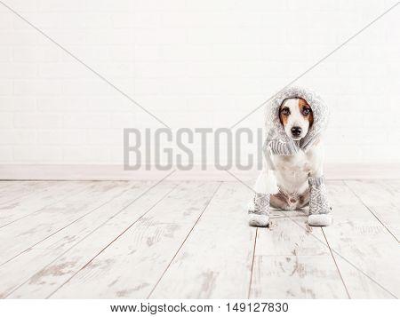 Dog in socks. Warm clothing pet