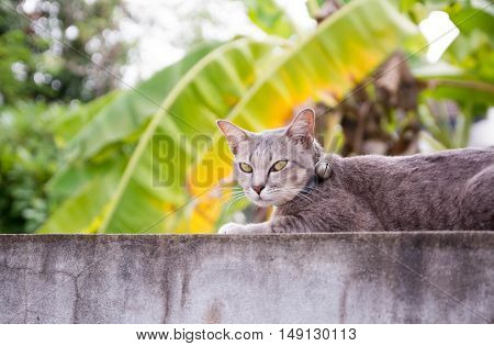 funny cat with blurred background, cat love green background