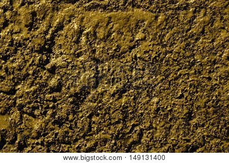 Yellow swamp surface macro natural texture photo