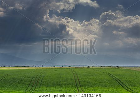 Vast green cornfield under stormy sky with sunrays passing through the clouds. Weather forecast for agriculture.