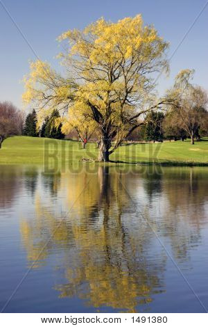 Golf Course Reflections