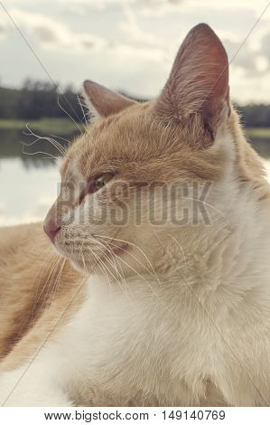Beautiful red cat with yellow eyes resting on the beach