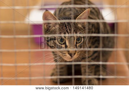 Young cat sitting in a cage and looking away