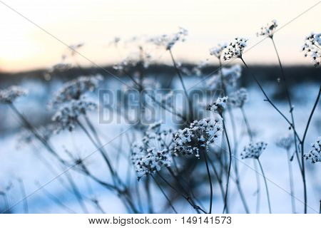 winter, flowers, cold, snow, snowflake, frost, nature