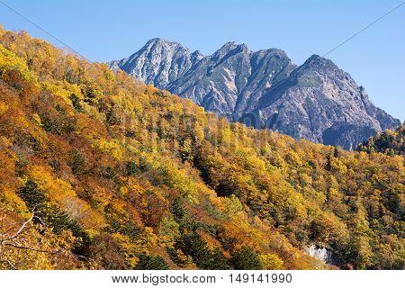 Autumn color forest and mount Myoujin under blue sky in Nagano