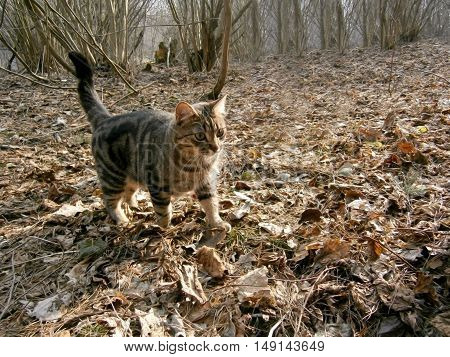 Cat on a walk in the autumn forest