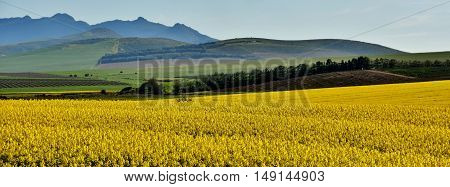 Landscape with Mountains and yellow rape fields
