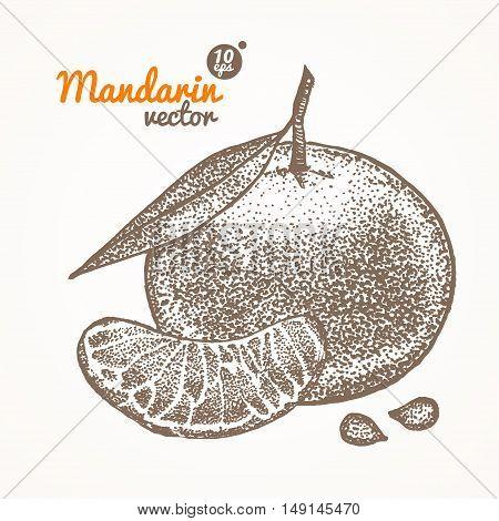 Mandarin Card Hand Draw Sketch. Vector illustration