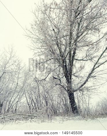 Majestic landscape with fog during a snowfall. Dramatic and picturesque wintry scene. Winter forest with snow on trees and floor