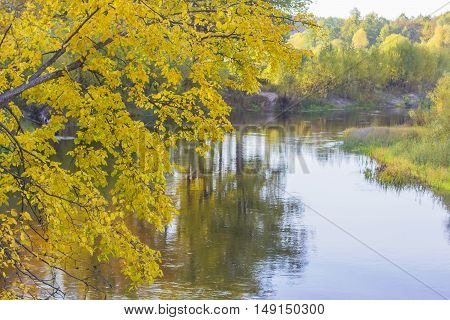 background branches landscape yellow tree over the river in the autumn forest