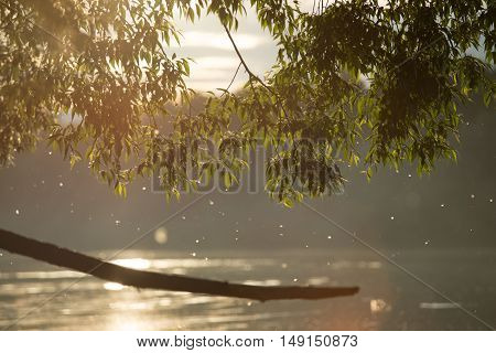 Summer or early autumn park with pond river and weeping willow trees on the shore with. big branch in the middle.