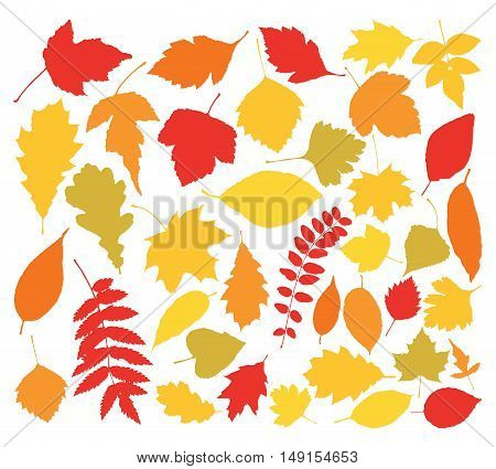 vector silhouettes of colorful autumn leaves isolated on white