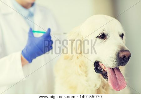 medicine, pet, animals, health care and people concept - close up of veterinarian doctor with syringe making vaccine injection to golden retriever dog at vet clinic