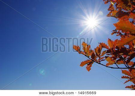 Sunshine autumn leaves
