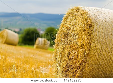 Closeup of round bale after grain harvest in the meadow.