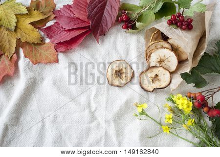 autumn leaves and dried apples on textile background