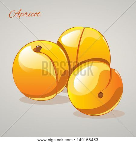 Cartoon sweet appricots isolated on grey background, vector illustration. Fruits and vegetables collection.
