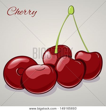 Cartoon sweet cherries isolated on grey background, vector illustration. Fruits and vegetables collection.