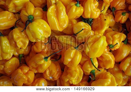 Yellow hot habanero peppers piled for market market  background
