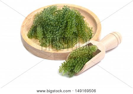 Sea grapes ( green caviar ) seaweed Healthy food.