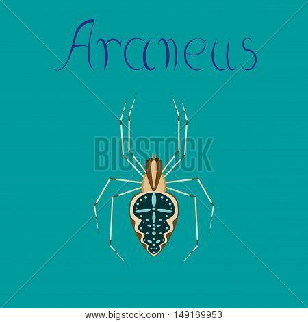 flat illustration on stylish background spider Araneus