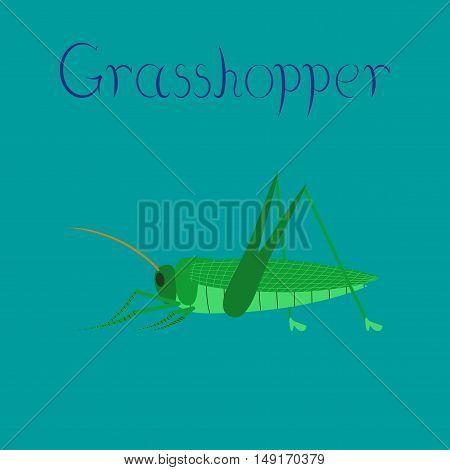 flat illustration on stylish background insect grasshopper
