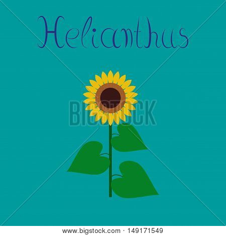 flat illustration on stylish background flower sunflower