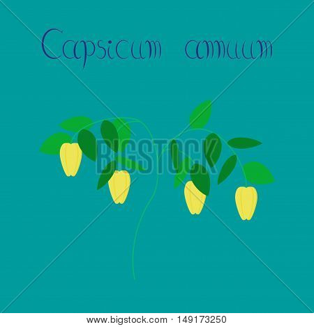 flat illustration on stylish background plant capsicum