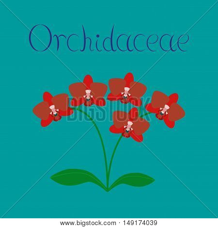 flat illustration on stylish background flower orhidaceae