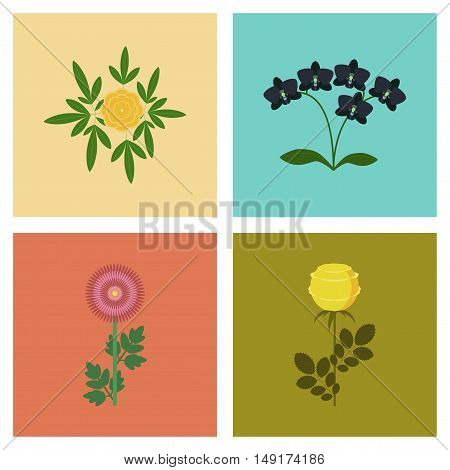 assembly of flat Illustrations plant flower paeonia chrysanthemum orhidaceae rosa