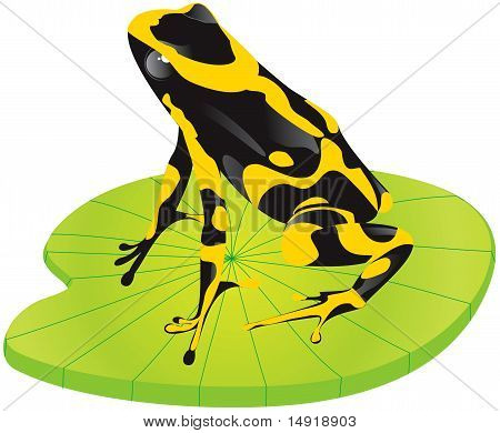 Yellow frog on green sheet.