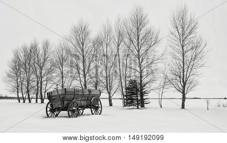horizontal black and white image of a beautiful winter scene of an old wood  farm wagon with wooden wheels  sitting on a blanket of snow along a row of bare trees.