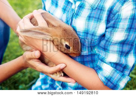 Brown little hare sits in man's hands. rabbit-breeding