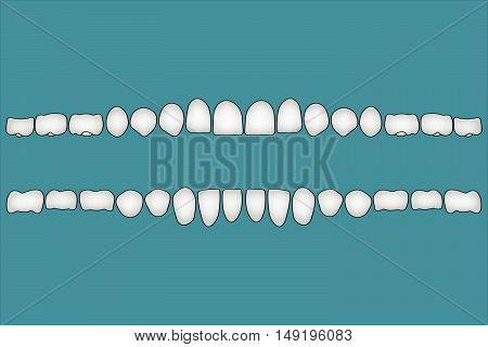 Teeth a person's front side, the crown part of the dentition, illustration for print or design dental website