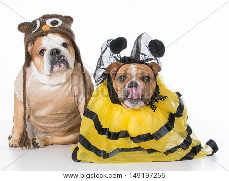 english bulldogs dressed up like the birds and the bees on white background