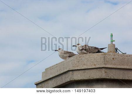 Beautiful seagulls are enjoying the autumn sun on the shore of the Adriatic Sea