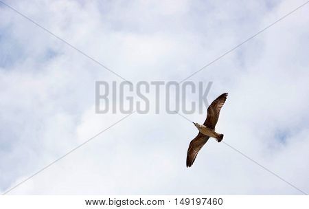 Beautiful seagulls flying over the Adriatic Sea with beautiful sky in the backgrounde.