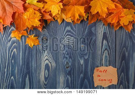 Autumn Background Colorful Leaves On