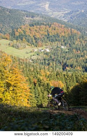 Extreme mountainbiker rides on path in forest