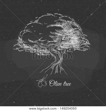 vector illustration with old olive tree on a blackboard