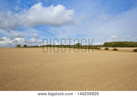 Cultivated Soil In Late Summer