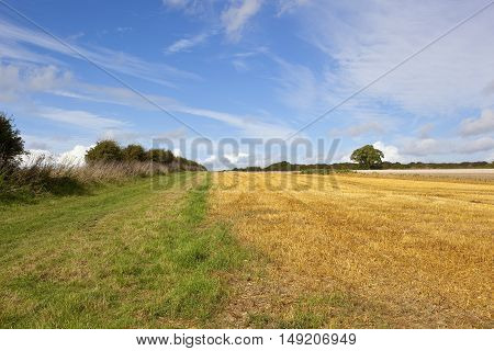 Footpath Through Agricultural Land