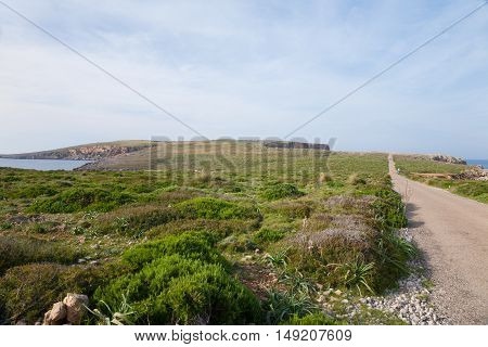landscape with bush and field and rural road to lighthouse of Cape Cavalleria next to the water sea in Fornells Menorca Balearic Islands Spain Europe