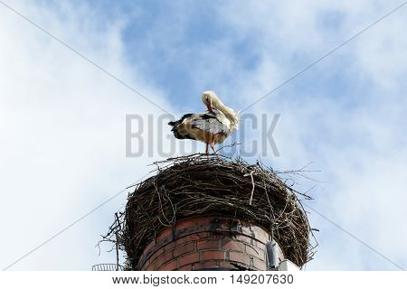 Stork stands in a nest on the chimney and dressing its feathers