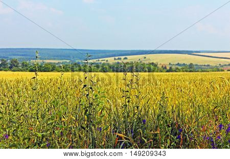 Meadows and fields in the summer, Ukraine