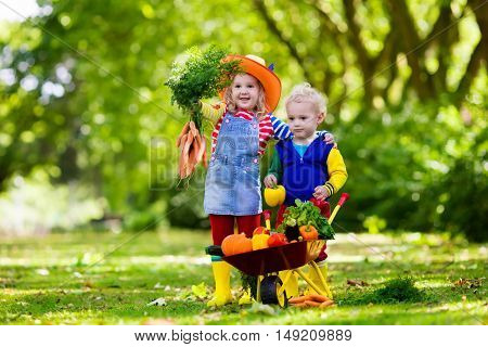 Two children picking fresh vegetables on organic bio farm. Kids gardening and farming. Autumn harvest fun for family. Toddler kid and preschooler play outdoors. Healthy nutrition for child and baby.