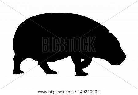 Side View of Hippopotamus Silhouette on White Background. Isolated vector illustration animal theme.